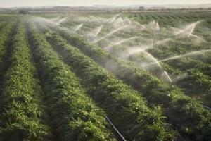 Amsis Industries – un real ajutor pentru orice agricultor